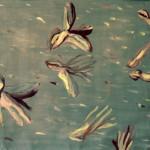 2000 Ptaci 110x80cm